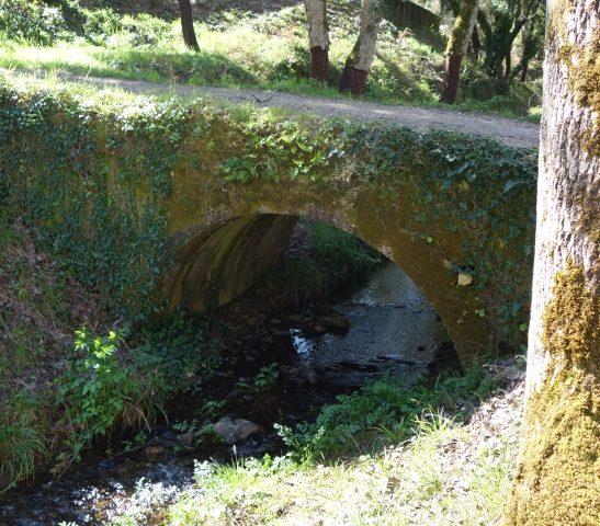 Dornes Verde